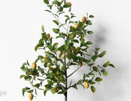گلدان + درختچه لیمو