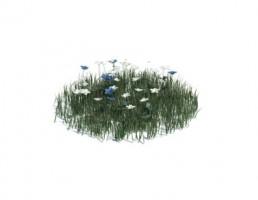 گل بهاری + چمن متوسط