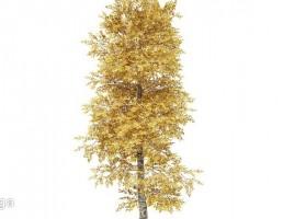 درخت پاییزی