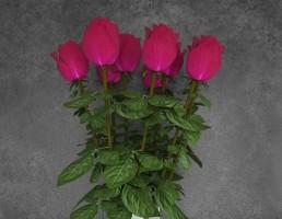 گلدان شیشه + گل رز