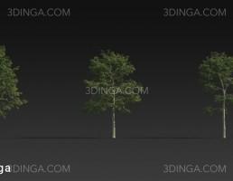انواع درختان سرسبز