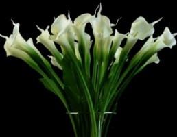 گلدان + گل شیپوری