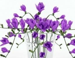 گلدان شیشه + گل مریم