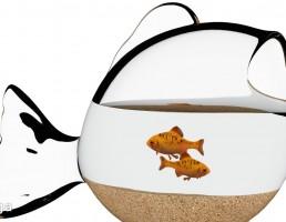 تنگ ماهی + ماهی
