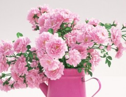 گلدان + گل محمدی