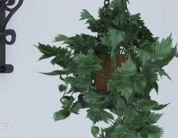 گلدان + گیاهان خانگی آویز