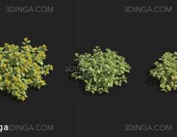 انواع گیاهان باغی