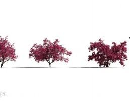 درختچه در فصل بهار