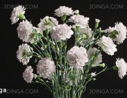 گلدان + گل میخک