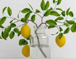گلدان + شاخه درخت لیمو