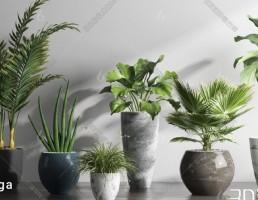 گیاهان تزیینی