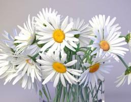 گلدان + گل مینای چمنی