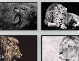 تابلو دیواری شیر جنگل