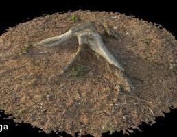 ریشه درختان جنگلی