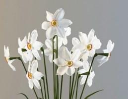 گلدان + گل نرگس