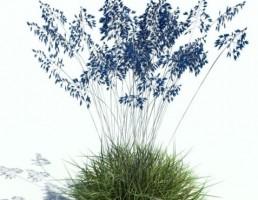 گیاه بهاری + چمن