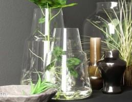 بطری شیشه + گیاه تزیینی