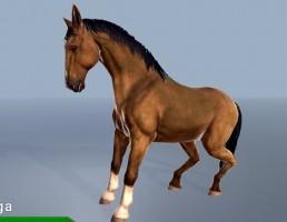 اسب وحشی
