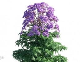 گیاهان باغی