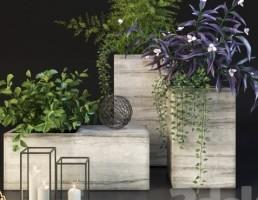 گلدان و گیاهان کوچک