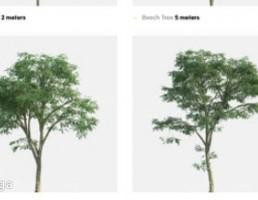 مجموعه درختان راش