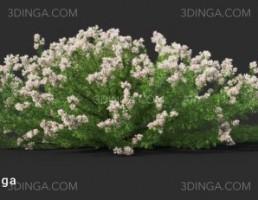 بوته گل طبیعی