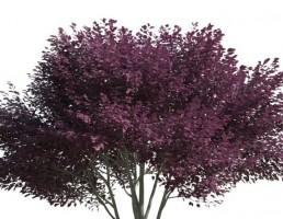 درخت فانتزی