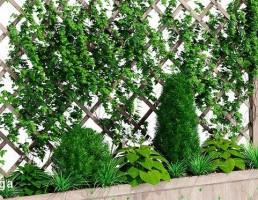 گیاهان بالا رونده