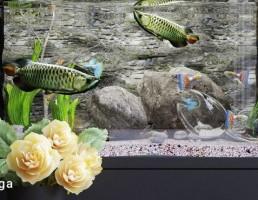 آکواریوم فانتزی + گل + گلدان