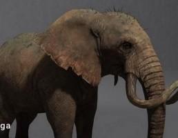 فیل سه بعدی