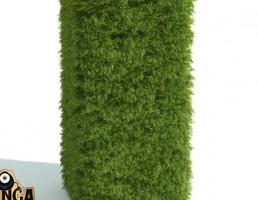 گیاه پرچین