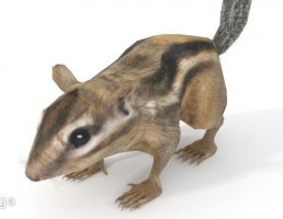 موش خرمای زمینی