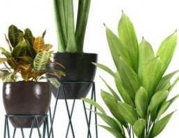 مدل سه بعدی گیاهان