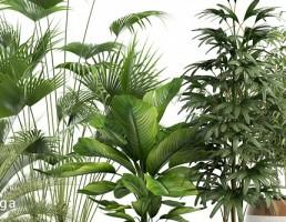 کالکشن 113 گیاهان
