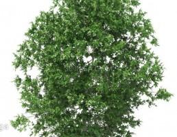 درخت در فصل تابستان