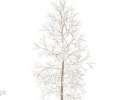 درخت در فصل زمستان