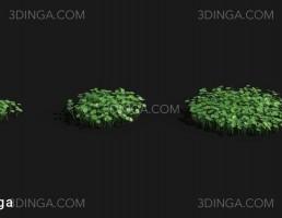 گیاهان سه بعدی آبزی