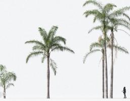 درختان نخل