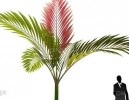 درخت نخل مناطق گرمسیری