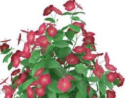 گلهای زینتی