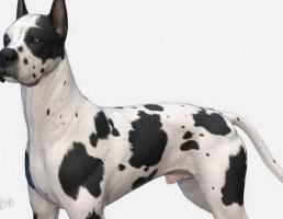سگ Great Dane 3D Model