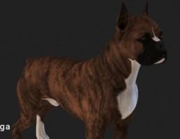 سگ Bull Terrier