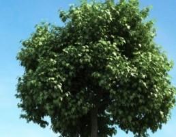 درخت + چمن