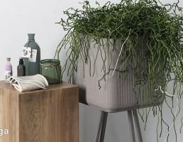 گلدان + گیاهان خانگی + لوازم بهداشتی