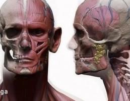 آناتومی بدن زن و مرد