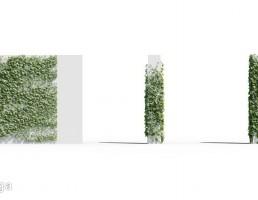 گیاهان پیچک باغ