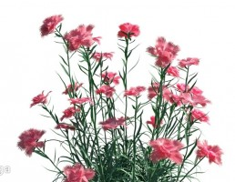 گیاهان فضای باز
