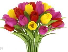 گلدان + دسته گل لاله