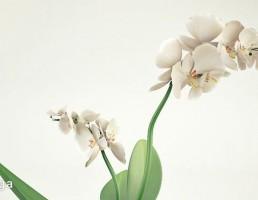 گلدان + گل ارکیده