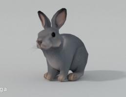 خرگوش خاکستری